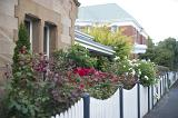 Street view of neat colorful front gardens full of flowering plants behind white picket fences in front of a stone house and cottages