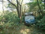 Abandoned truck in an overgrown woodland