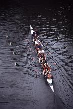 a university rowing team viewed from above