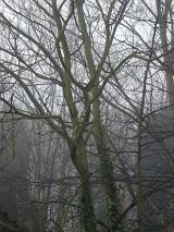 Image result for black trees against a grey sky pictures